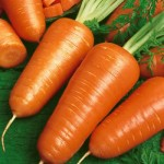 Carrot Chantenay 01